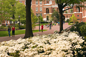 Homewood campus in the spring