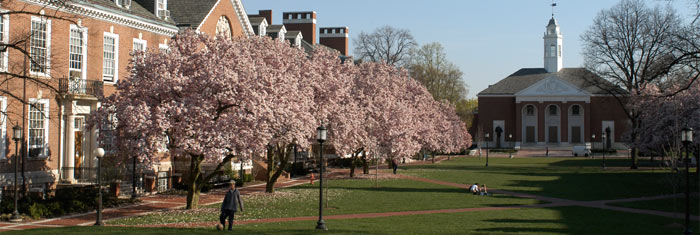 Johns Hopkins campus with cherry blossoms